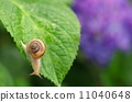 달팽이 11040648