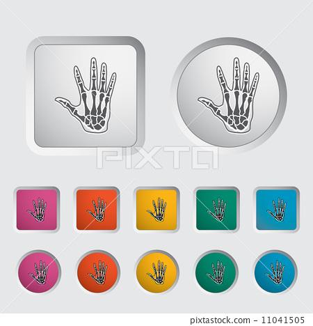 Anatomy hand 11041505