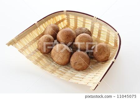 Brown mushroom 11045075