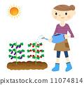 菜園 水生植物 夫人 11074814