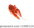 Boiled crawfish 11080124