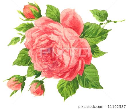 roses14627pix1 11102587