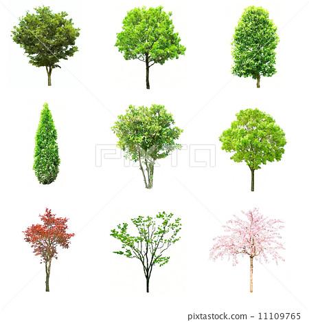 水彩樹9分 11109765