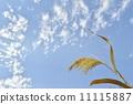 가을, 하늘, 푸른 11115887