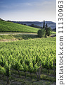 vineyard, tuscany, green 11130963