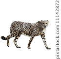 cheetah, wildlife, animal 11142872