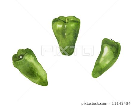 Green pepper illustration 11145484