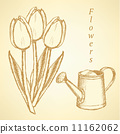 Sketch tulip and watering can, vector  background 11162062