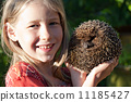 little girl with cute hedgehog 11185427