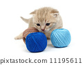 wool ball cat 11195611