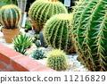 Cactus 11216829