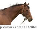 Brown horse head 11232869