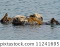 海獭 剥撕式面膜 海岸 11241695