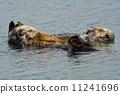 海獭 剥撕式面膜 海岸 11241696