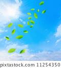 foliage, blue sky, leaves 11254350