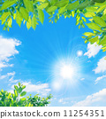 tender green, verdure, blue sky 11254351