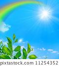 verdure, tender green, blue sky 11254352