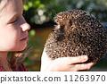 little girl with cute European hedgehog 11263970