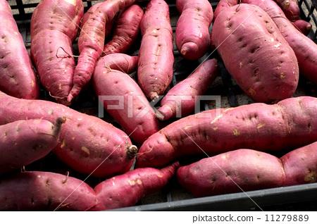 Sweet potato 11279889