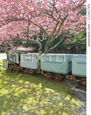 Truck and cherry tree 11281764