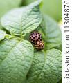 瓢蟲與葉子 11304876