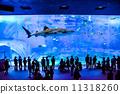 Churaumi Aquarium 11318260