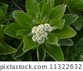 Mongolian flowers 11322632