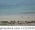 Chidori on the beach 11322640
