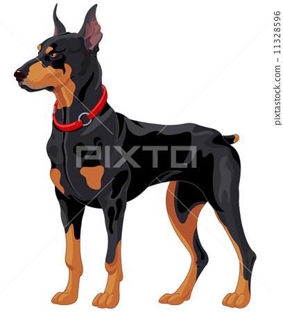 Doberman guard dog 11328596