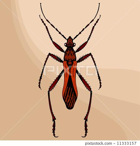 Brown bug 11333157