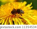 bee animal pollen 11354534