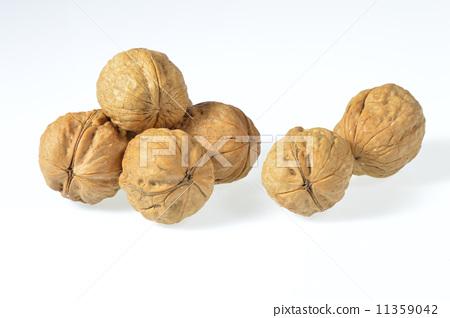 walnut 11359042