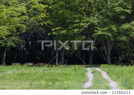 新鮮的綠色森林 11360211