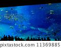 水族館 魚 黃貂魚 11369885