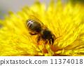 bee animal pollen 11374018