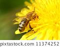 bee animal pollen 11374252
