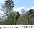 穂状 파란 꽃은 버베나 · 하스타타 꽃과 이후에 야자수 11381183