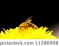 bee animal pollen 11386908