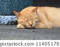 流浪猫小睡一会儿 11405176