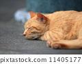 流浪猫小睡一会儿 11405177