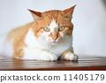 放松的流浪猫 11405179