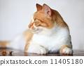 放松的流浪猫 11405180