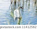 swan, bird, lake 11412562