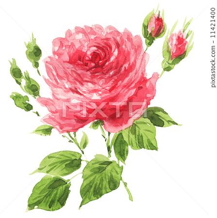 watercolour, watercolors, rose 11421400