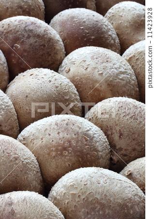 Shiitake mushroom 11423928