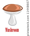 mushroom, white, isolated 11448607