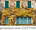 Old building with yellowed ivy and green windows 11477750