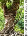 巨大的 自然 樹木 11539046