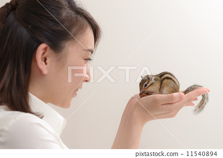 手騎松鼠 11540894