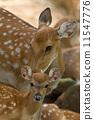 wildlife, doe, fauna 11547776